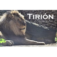 Apadrina a Tirion