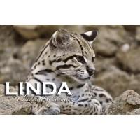 Apadrina a Linda