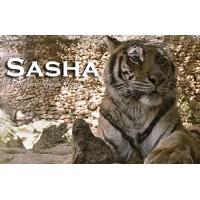 Apadrina a Sasha